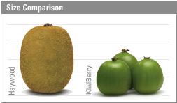 Kiwi to Kiwiberry Comparison